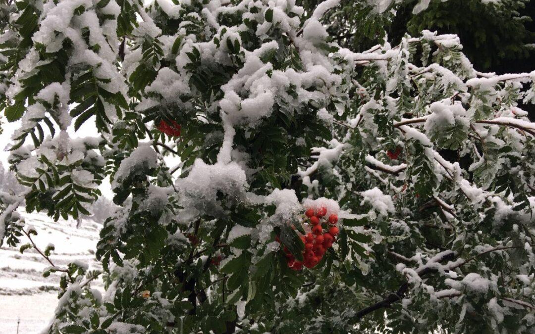 Turnfahrt in den herbstlichen Schnee